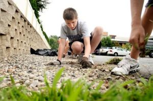 Teen pulling weeds as party of a service project